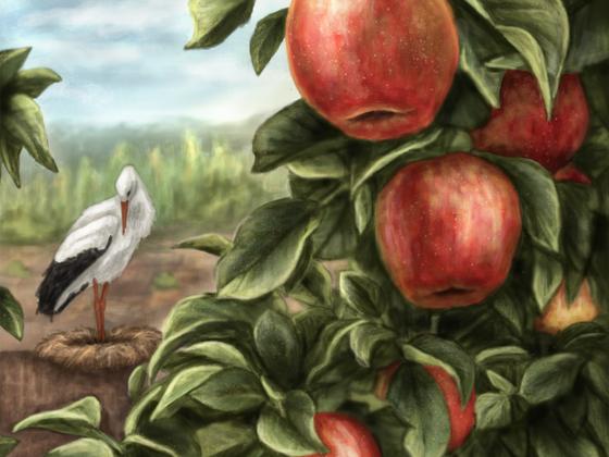 Peraine-Äpfel