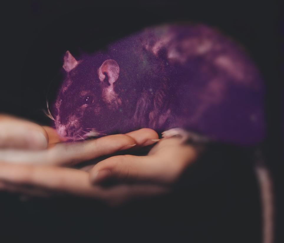Das Rattenkind