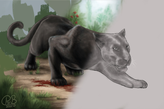 Schwarzer Panther - Video