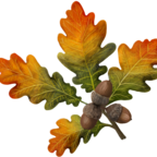 Herbstliche Eichenblätter